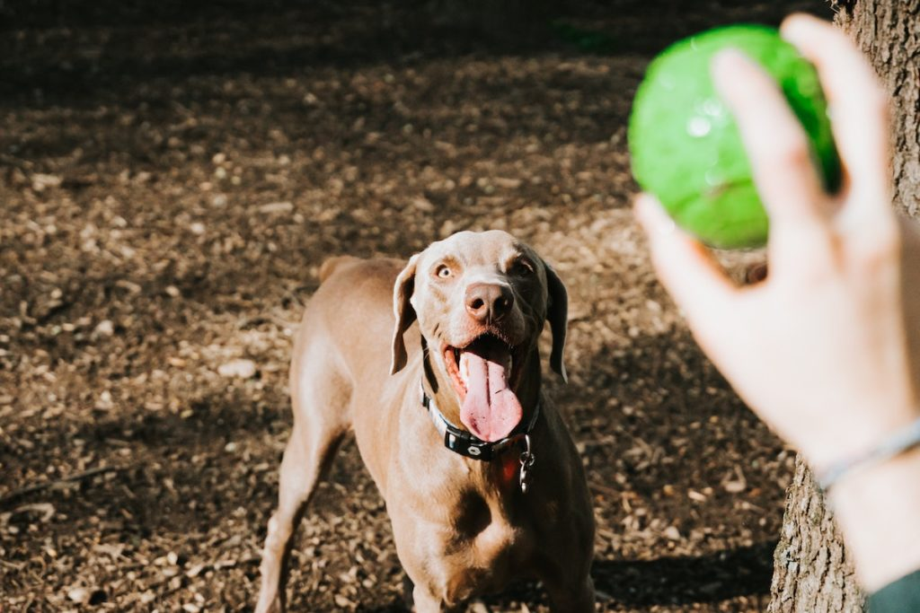 Playing fetch at the dog park
